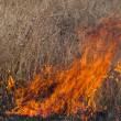 Fire in a field — Stock Photo