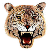 Hand Drawing of Tiger Head Portrait — Stockfoto