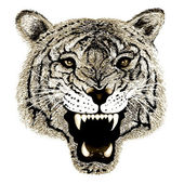 Hand Drawing of Black and White Tiger Head — Stock Photo
