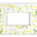 A Beautyful Horizontal Plumeria Frangipanis Frame — Stock Photo #28118379