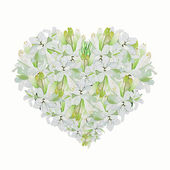 Heart Shape of White Tuberose — Stock Photo