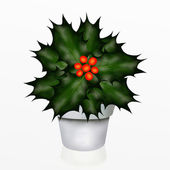 A Christmas Holly Tree in White Pot — Stock Photo