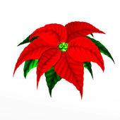Kerstmis poinsettia flower — Stockfoto