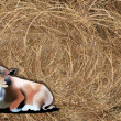 Hand Drawing of A Cow on Haybale Background — Stockfoto