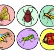 A Set of Insects on Round Background — Stock Vector