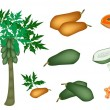 A Set of Fresh Papayas and Papaya Tree — Stock Vector