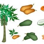 A Set of Fresh Papayas and Papaya Tree — Stock Vector