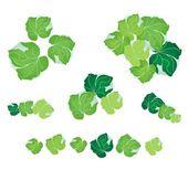 Набор polyscias листьев на белом фоне — Cтоковый вектор