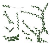 A Set of Creeper Plant on White Background — Stock Vector