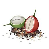 Ripe and Unripe Coffee Berries with Coffee Beans — Stock Vector