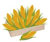 A Pile of Fresh Corn in Wooden Box — Foto Stock