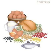 Health and Nutrition Benefits of Protein Foods — Stock Vector