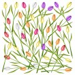 Set of Fresh Tulip Flowers Background — Stock Vector