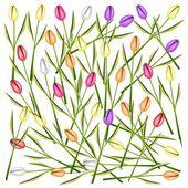 Set van verse tulp bloemen achtergrond — Stockvector