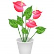 Anthurium Flowers or Flamingo Lily in A Flower Pot — Stock Vector