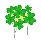 Fresh Water Clover Plant on White Background — Wektor stockowy
