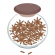 Постер, плакат: Jar of Dried Star Anise on White Background