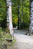 Trees in Ordesa park — Stock Photo