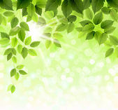 Summer branch with fresh green leaves — Stock Vector