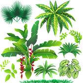 Plants — Stock Vector