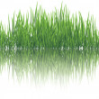 Stock Vector: Reflective grass