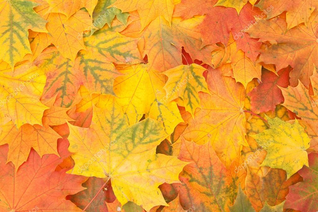 Autumn maple leaves Background — Stock Photo #12941385