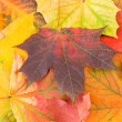 Stock Photo: Maple leaves background
