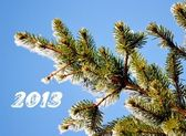 New Year's fir-tree branch. — Stock Photo