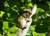 Chipmunk on a branch — Stock Photo