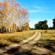 Stock Photo: Fall in forest-steppe