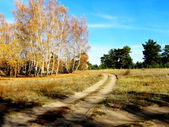 Fall in the forest-steppe — Stock Photo