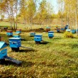 Stock Photo: Beekeeping of Altai