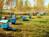 Beekeeping of Altai — Stock Photo