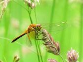 Vážka a léto — Stock fotografie