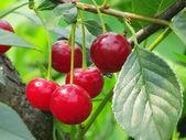 Autumn berry — Stock Photo