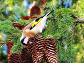Goldfinch on tree — Stock Photo