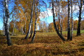 Etudes de otoño — Foto de Stock