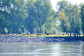 River etudes — Stock Photo