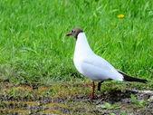 Steepe birds — Stock Photo