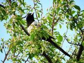 Steepe 鸟 — 图库照片