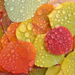 Colorful aspen leaves with raindrops — Stock Photo #17400921