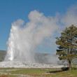 Old Faithful geyser, Yellowstone National Park, Wyoming — Stock Photo #17400941