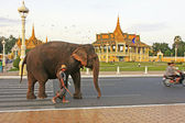 Elephant walking on Sisowath Quay, city center of Phnom Penh, Cambodia — Stock Photo