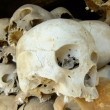 Stock Photo: Skulls of victims, Killing Fields, Phnom Penh, Cambodia