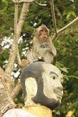 Long-tailed macaque playing at Phnom Sampeau, Battambang, Cambod — Stock Photo