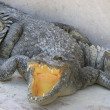 Crocodile farm — Stock Photo #23772023
