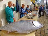 Mercado de pescado, split, croacia — Foto de Stock