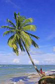 サマナ半島ラス テレナスのビーチでヤシの木に傾いて — ストック写真