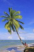 Leunend palmboom in las terrenas beach, schiereiland samana — Stockfoto