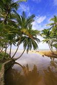 Río de agua dulce en playa de las terrenas, Península de Samaná — Foto de Stock